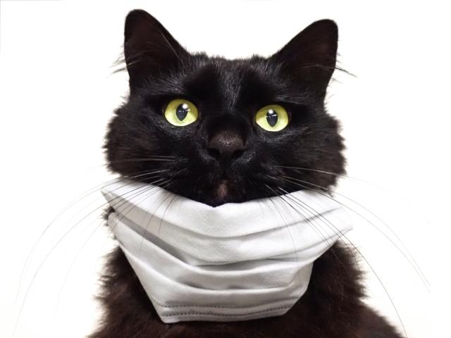 マスク 猫